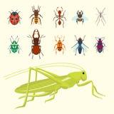 Os ícones coloridos dos insetos isolaram a ilustração selvagem do vetor dos erros do verão do detalhe da asa dos animais selvagen ilustração royalty free