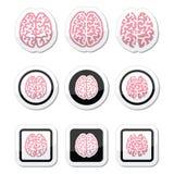 Os ícones do cérebro humano ajustaram - a inteligência, conceito da faculdade criadora Imagens de Stock