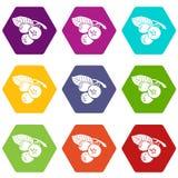 Os ícones do mirtilo ajustaram o vetor 9 Imagem de Stock Royalty Free