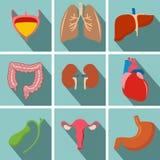 Os ícones longos lisos internos da sombra dos órgãos humanos ajustaram-se com - coração, u Fotos de Stock Royalty Free