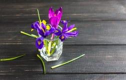Os açafrões, açafrão são flores muito bonitas da mola Cuidado e pl Foto de Stock Royalty Free