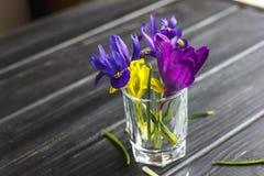 Os açafrões, açafrão são flores muito bonitas da mola Cuidado e pl Fotografia de Stock