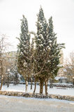 Os abeto cobertos de neve em uma cidade estacionam Pomorie, Bulgária, inverno 2017 fotografia de stock