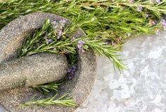 Os alecrins plantam no almofariz Imagens de Stock Royalty Free