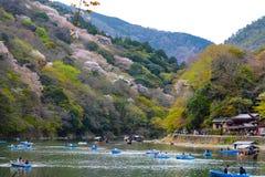 Os amantes e as famílias novos remam barcos a remos acima de Katsura River em Kyoto para apreciar as flores de cerejeira da mola fotografia de stock royalty free