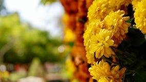 Os amarelos florescem no fundo maduro imagens de stock
