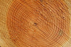 Os anéis anuais da árvore fecham-se acima Foto de Stock Royalty Free