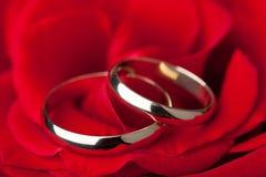 Os anéis de casamento dourado sobre o vermelho levantaram-se Imagem de Stock