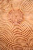 Os anéis do pinheiro Imagem de Stock