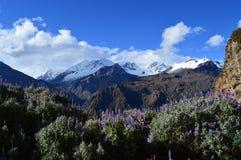 Os Andes imagem de stock