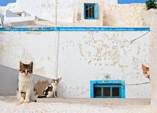 Os anfitriões da casa abandonada. Imagem de Stock Royalty Free
