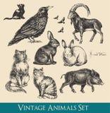 Os animais ajustaram-se Foto de Stock Royalty Free