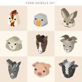 Os animais de exploração agrícola ajustaram infographic 3d isométrico Imagens de Stock Royalty Free