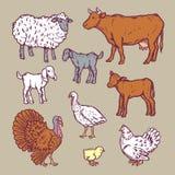 Os animais de exploração agrícola detalharam o grupo do ícone, estilo dos desenhos animados ilustração stock