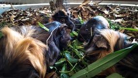 Os animais do hamster estão comendo foto de stock