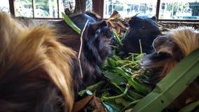 Os animais do hamster estão comendo imagens de stock royalty free