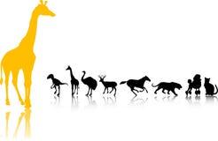 Os animais mostram em silhueta o jogo Foto de Stock Royalty Free