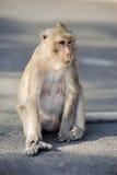 Os animais selvagens bonitos sentam solitário imagem de stock
