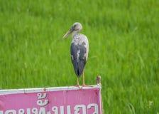 Os animais selvagens maravilhosos de Tailândia imagens de stock royalty free