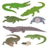 Os animais selvagens verdes do réptil do crocodilo e do jacaré vector a ilustração ilustração royalty free