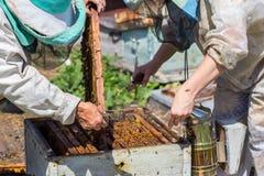 Os apicultor abrem a colmeia Imagens de Stock