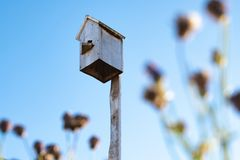 Os arbustos obscuros no primeiro plano no aviário traseiro do queimador e no céu azul, um aviário caseiro das placas de madeira foto de stock