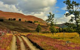 Os assediadores seguem, Deeside, Scotland Fotos de Stock Royalty Free