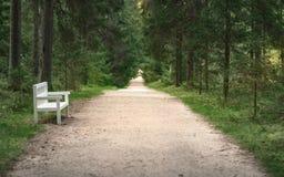 os bancos brancos na trilha no verão estacionam entre as árvores verdes imagem de stock