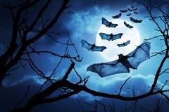 Os bastões assustadores voam dentro para a noite de Dia das Bruxas por uma Lua cheia Foto de Stock