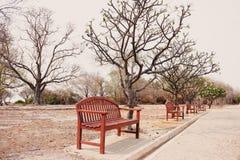 Os benchs de madeira sós vazios com as árvores de morte no vintage tonificam fotos de stock