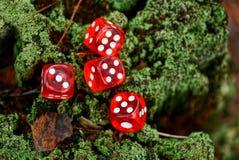 Os blocos transparentes vermelhos do jogo encontram-se em um coto verde Fotos de Stock Royalty Free