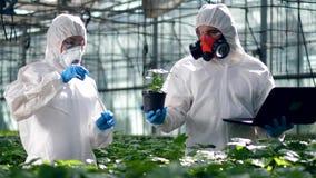 Os botânicos derramam o líquido em um potenciômetro com uma planta em uma estufa vídeos de arquivo