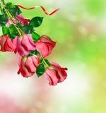 Os botões de rosas das flores Foto de Stock