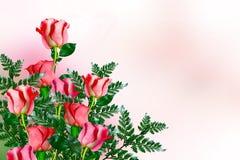 Os botões de rosas das flores Fotografia de Stock Royalty Free