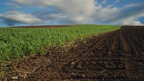 Os brotos verdes do trigo colocam e terra arável no campo cultivado agrícola, nuvens de Timelapse no fundo filme