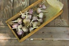 Os bulbos do alho do close-up e os cravos-da-índia de alho wodeen sobre Fotos de Stock Royalty Free