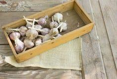 Os bulbos do alho e os cravos-da-índia de alho na caixa wodeen sobre o fundo Imagens de Stock Royalty Free