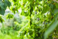Os bulbos no jardim penduram na árvore Fotos de Stock Royalty Free