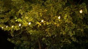Os bulbos penduram sobre a árvore com folha verde Fotos de Stock