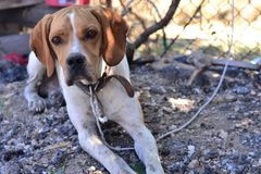 Os cães bonitos são animais amigáveis e úteis aos povos Fotos de Stock Royalty Free