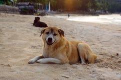 Os cães colocam na praia que olham as férias de verão Imagens de Stock