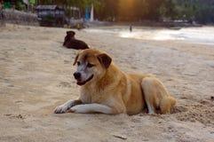 Os cães colocam na praia que olham as férias de verão Fotografia de Stock Royalty Free