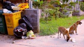 Os cães dispersos comem a escumalha em torno dos escaninhos de lixo vídeo vídeos de arquivo