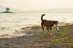 Os cães dispersos estão levando morrem peixes no mounth Imagem de Stock
