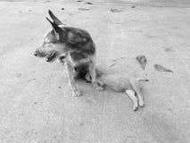 Os cães e o cachorrinho da mãe Imagens de Stock Royalty Free