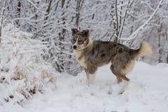 Os cães jogam na neve no inverno imagem de stock