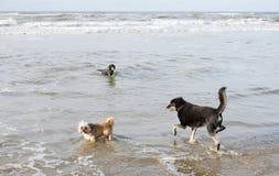 Os cães no inverno ensolarado encalham nos Países Baixos Imagens de Stock