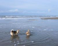 Os cães no inverno ensolarado encalham nos Países Baixos Imagem de Stock