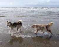 Os cães no inverno ensolarado encalham nos Países Baixos Fotos de Stock