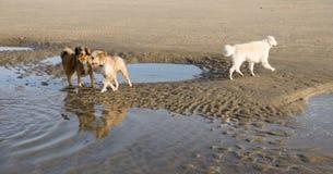 Os cães no inverno ensolarado encalham nos Países Baixos Foto de Stock
